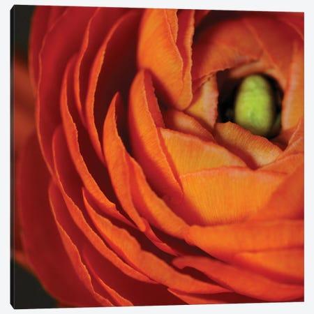 Orange Flower Close-Up Canvas Print #TQU174} by Tom Quartermaine Canvas Art