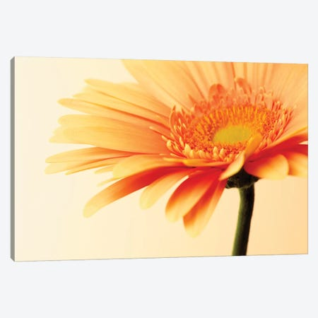 Orange Flower On Orange Canvas Print #TQU177} by Tom Quartermaine Canvas Artwork