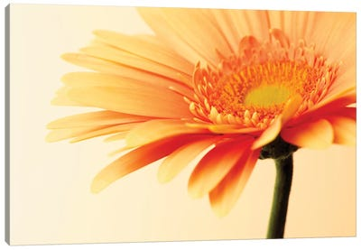 Orange Flower On Orange Canvas Art Print
