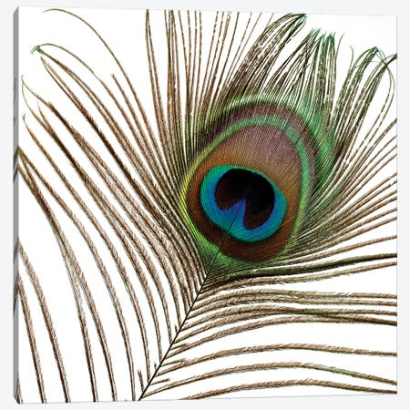 Peacock Feather I Canvas Print #TQU183} by Tom Quartermaine Canvas Wall Art