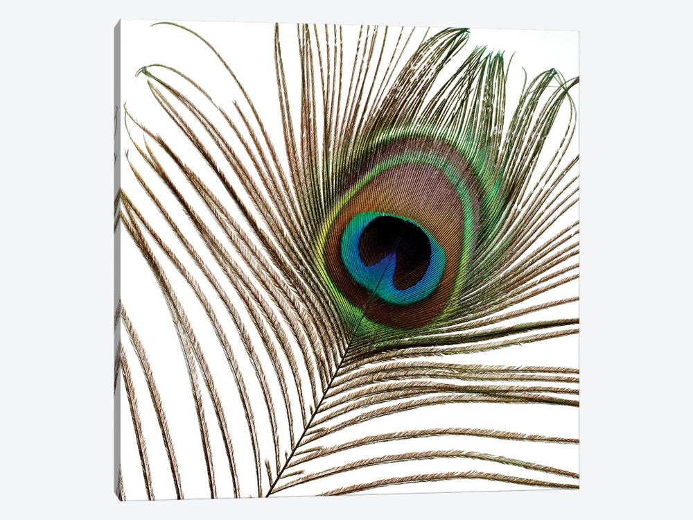 Peacock Feather I by Tom Quartermaine 1-piece Canvas Artwork