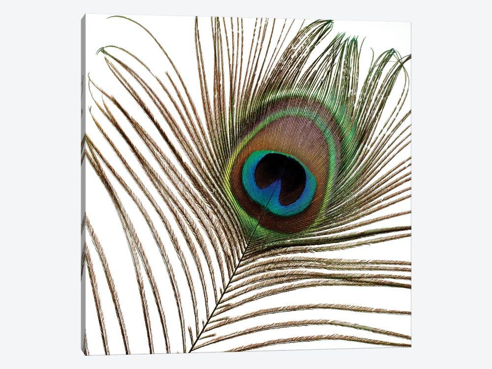 Peacock Feather I by Tom Quartermaine 1-piece Canvas Artwork