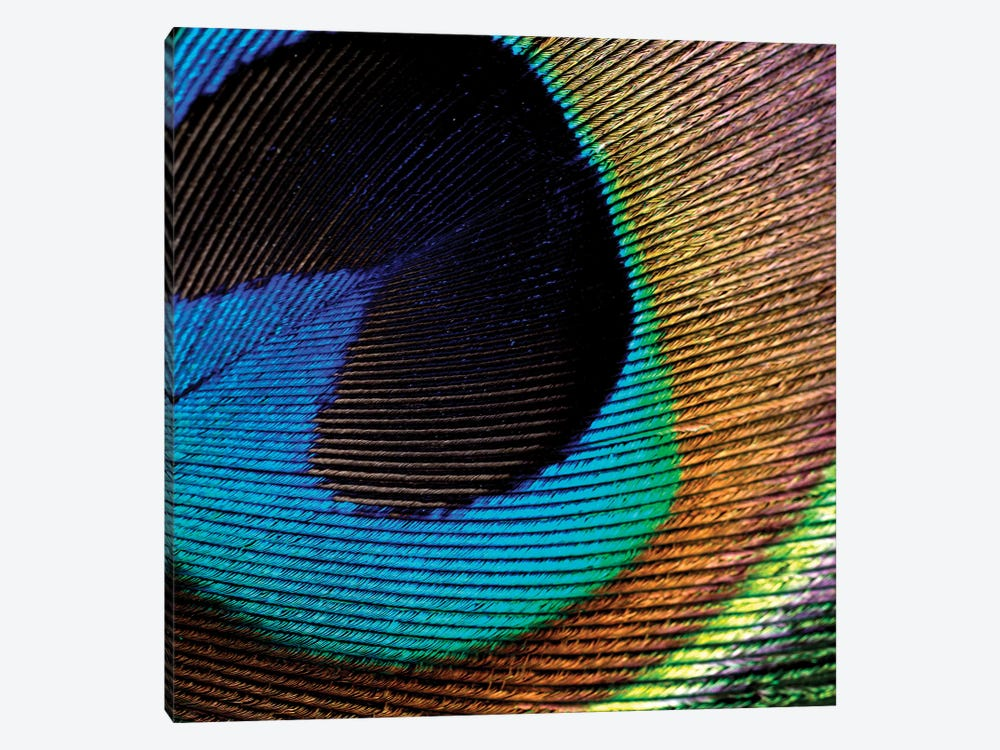 Peacock Feather II by Tom Quartermaine 1-piece Canvas Art Print
