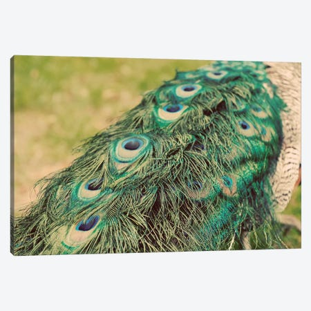 Peacock Feather Tail I Canvas Print #TQU185} by Tom Quartermaine Canvas Print