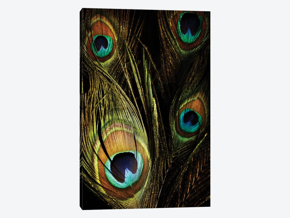 Peacock Feathers III by Tom Quartermaine 1-piece Canvas Art Print