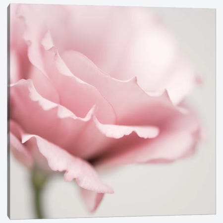 Pink Flower I Canvas Print #TQU199} by Tom Quartermaine Canvas Print