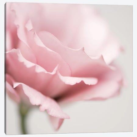 Pink Flower I Canvas Print #TQU199} by Tom Quartermaine Canvas Print
