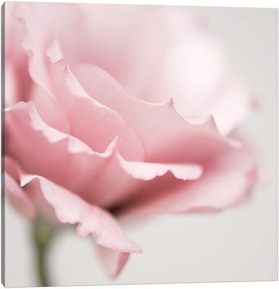 Pink Flower I Canvas Art Print