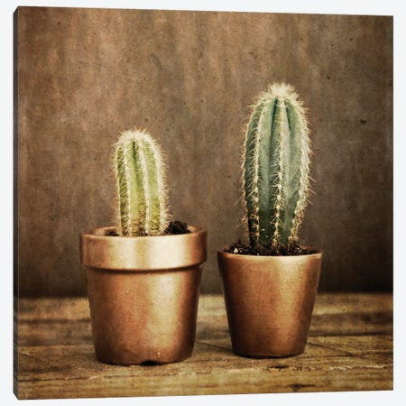 2 Cacti On Brown Texture Canvas Print #TQU1} by Tom Quartermaine Canvas Wall Art