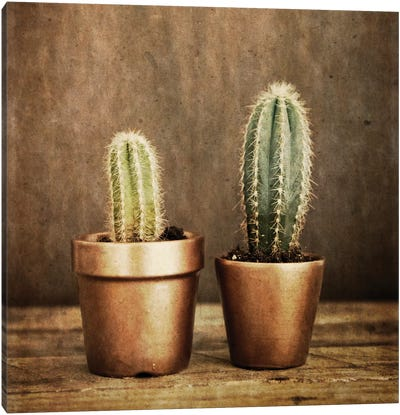 2 Cacti On Brown Texture Canvas Art Print