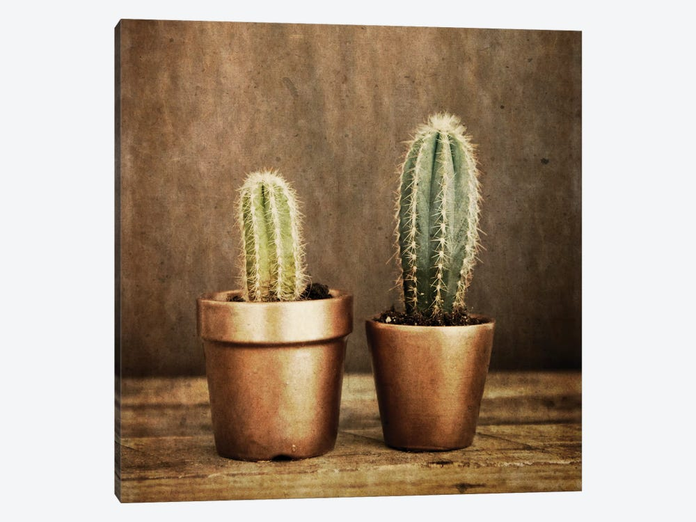 2 Cacti On Brown Texture by Tom Quartermaine 1-piece Canvas Print