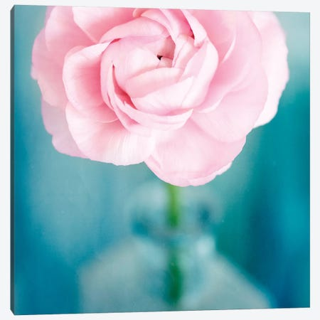 Pink Flower In Blue Bottle Canvas Print #TQU200} by Tom Quartermaine Canvas Print