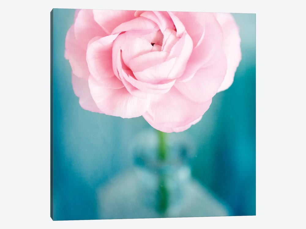 Pink Flower In Blue Bottle by Tom Quartermaine 1-piece Canvas Art Print