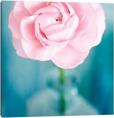 Pink Flower In Blue Bottle Canvas Art Print