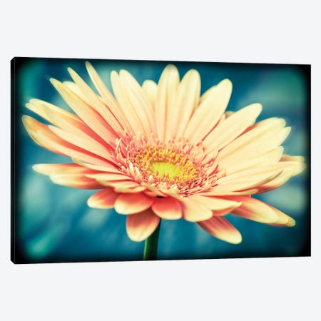 Pink Flower With Frame Canvas Print #TQU203} by Tom Quartermaine Canvas Art Print