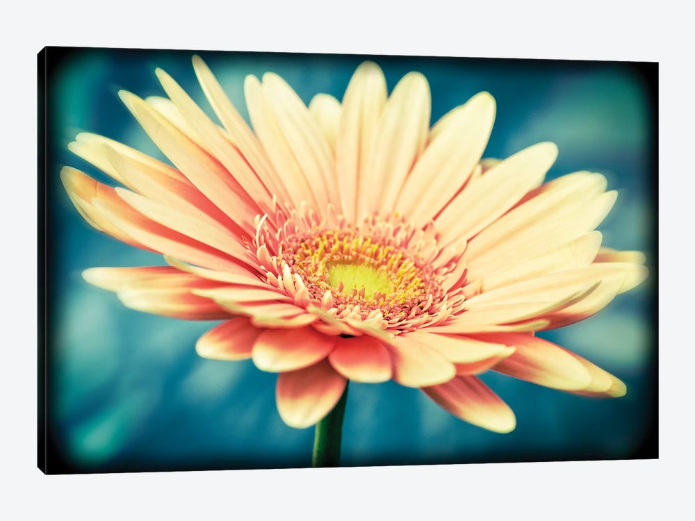 Pink Flower With Frame by Tom Quartermaine 1-piece Canvas Artwork