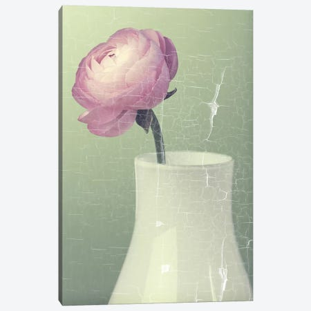 Pink Ranunculus In White Vase On Green 3-Piece Canvas #TQU210} by Tom Quartermaine Canvas Wall Art