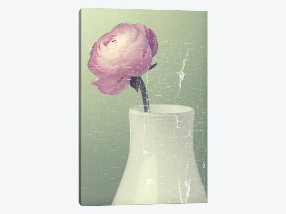 Pink Ranunculus In White Vase On Green by Tom Quartermaine 1-piece Canvas Art