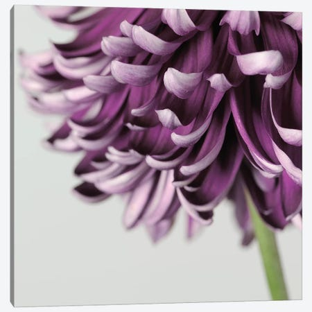 Purple Flower On Grey Canvas Print #TQU224} by Tom Quartermaine Canvas Wall Art