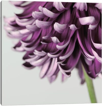 Purple Flower On Grey Canvas Art Print