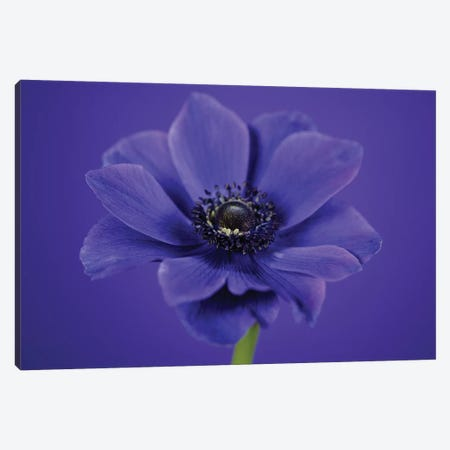 Purple Flower On Purple I Canvas Print #TQU225} by Tom Quartermaine Canvas Art