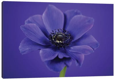 Purple Flower On Purple I Canvas Art Print
