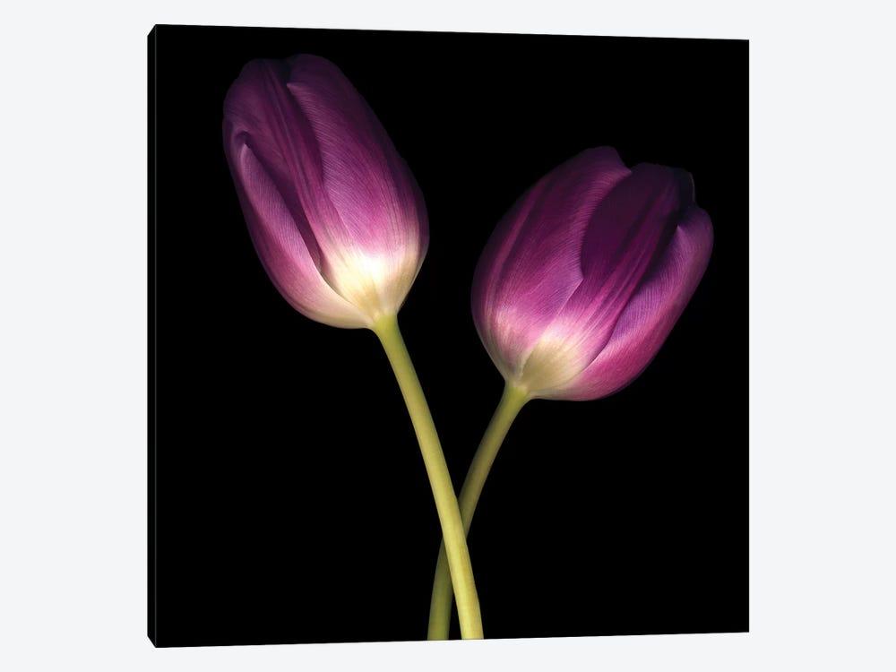 Purple Tulips On Black III by Tom Quartermaine 1-piece Canvas Wall Art