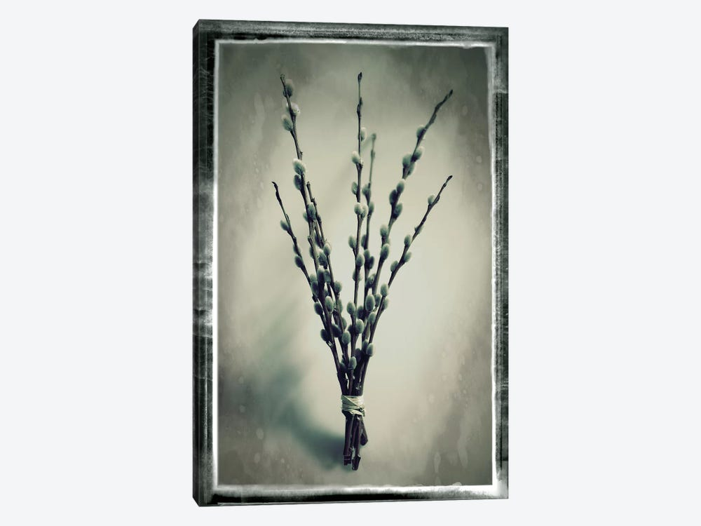 Pussy Willow IV by Tom Quartermaine 1-piece Canvas Art Print