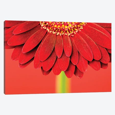 Red Gerbera On Red IV Canvas Print #TQU253} by Tom Quartermaine Canvas Wall Art