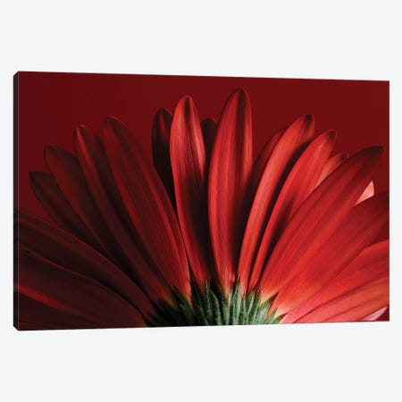 Red Gerbera On Red IX Canvas Print #TQU256} by Tom Quartermaine Art Print