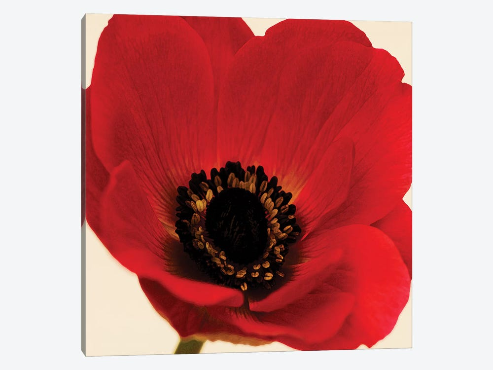 Red Poppy I by Tom Quartermaine 1-piece Canvas Art