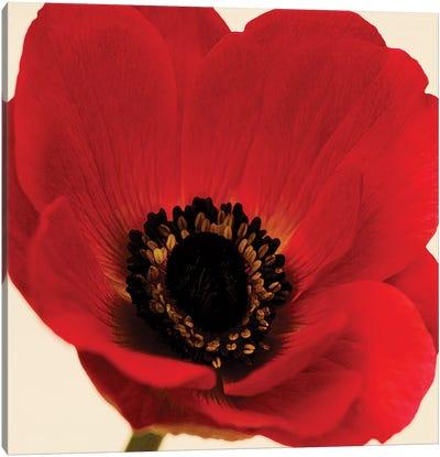 Red Poppy I Canvas Art Print