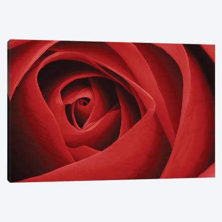 Red Rose I Canvas Print #TQU263} by Tom Quartermaine Art Print