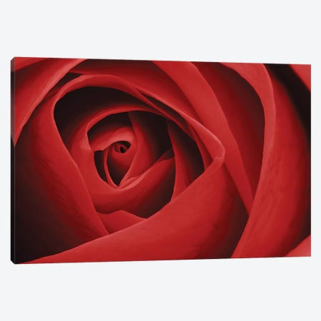 Red Rose I Canvas Print #TQU263} by Tom Quartermaine Art Print
