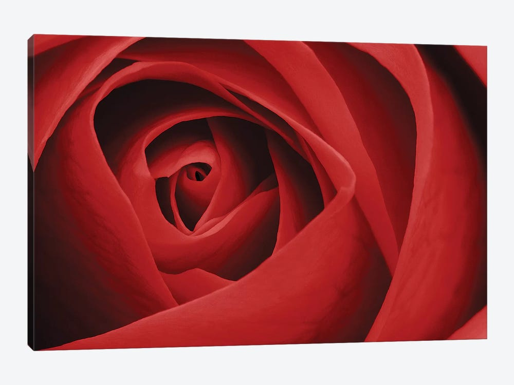 Red Rose I by Tom Quartermaine 1-piece Canvas Art