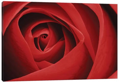 Red Rose I Canvas Art Print