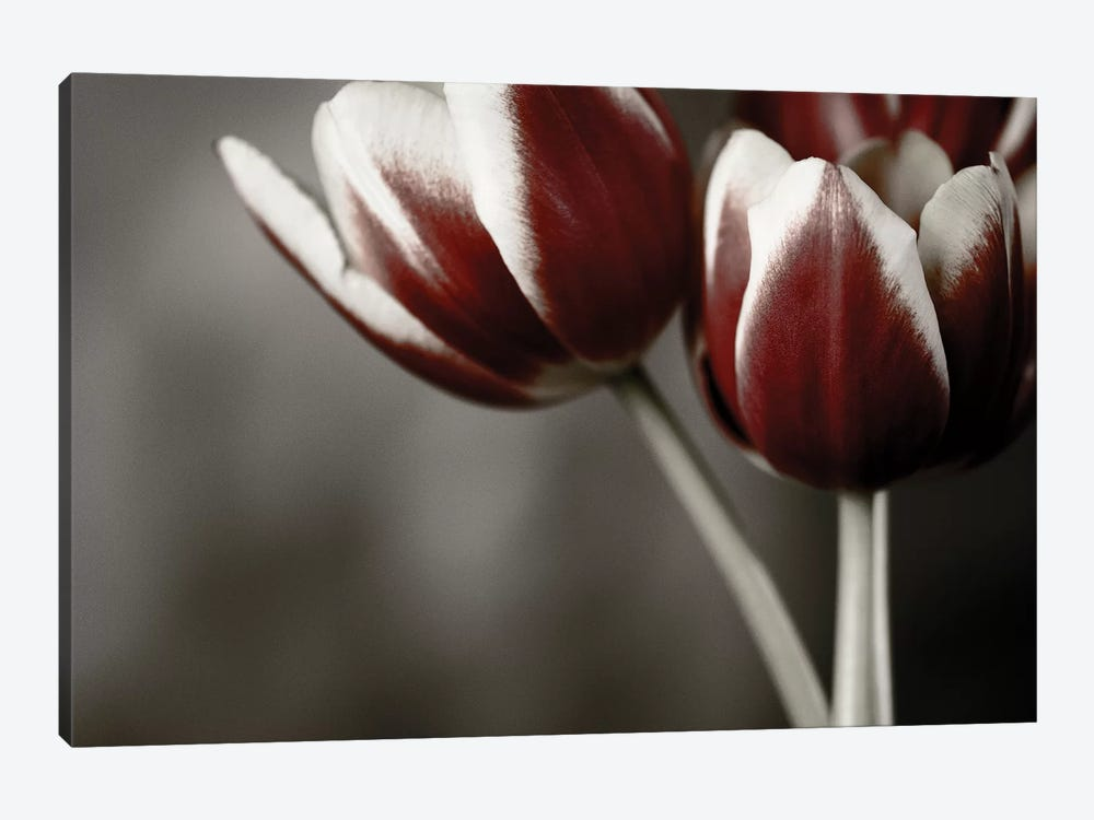 Red Tulips On Grey I by Tom Quartermaine 1-piece Canvas Art Print