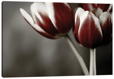 Red Tulips On Grey I Canvas Art Print