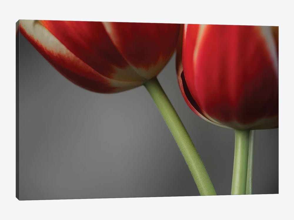 Red Tulips On Grey II by Tom Quartermaine 1-piece Canvas Art
