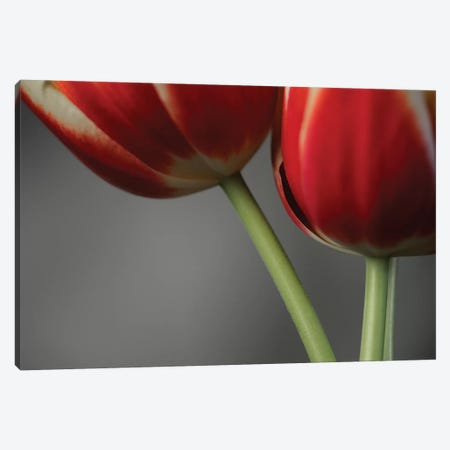 Red Tulips On Grey II 3-Piece Canvas #TQU267} by Tom Quartermaine Canvas Artwork