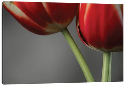 Red Tulips On Grey II Canvas Art Print
