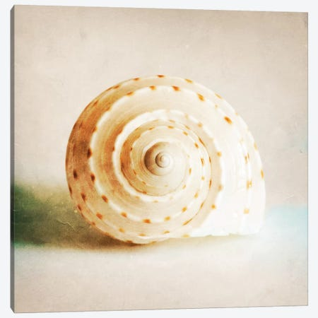 Antique Shell I Canvas Print #TQU26} by Tom Quartermaine Canvas Art Print