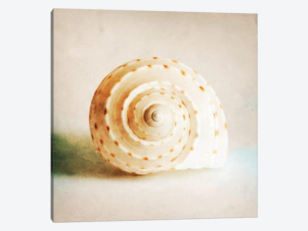Antique Shell I by Tom Quartermaine 1-piece Canvas Art Print