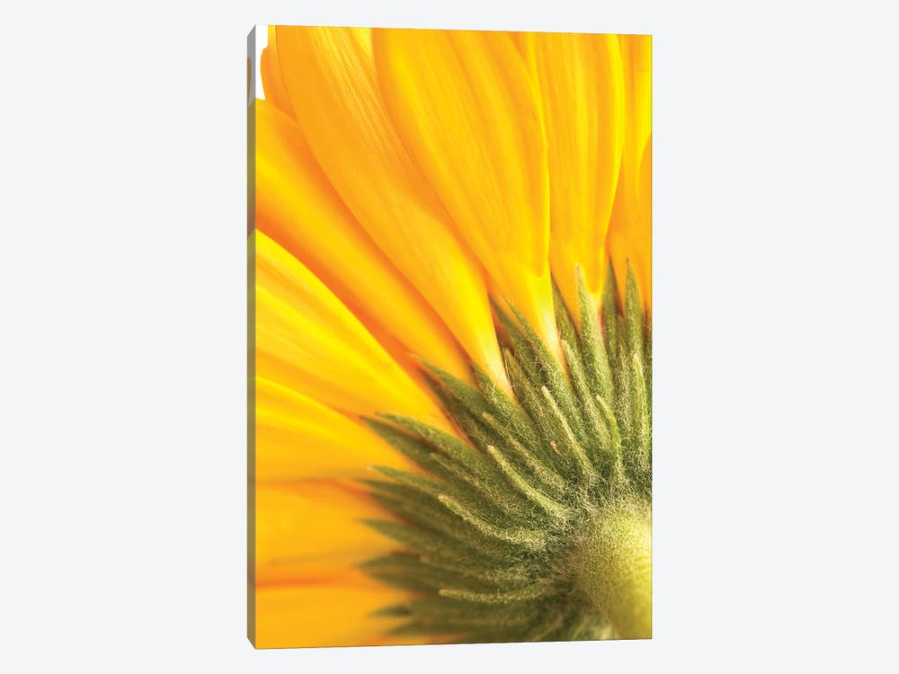 Reverse Of Yellow Flower by Tom Quartermaine 1-piece Canvas Art