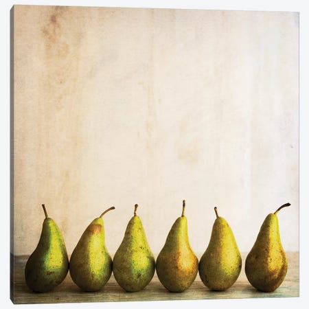 Row Of Antique Pears Canvas Print #TQU275} by Tom Quartermaine Art Print
