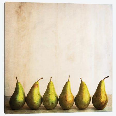 Row Of Antique Pears Canvas Print #TQU275} by Tom Quartermaine Art Print