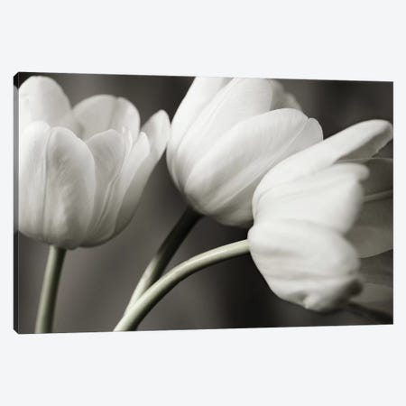 Row Of B&W Tulips 3-Piece Canvas #TQU276} by Tom Quartermaine Canvas Art Print