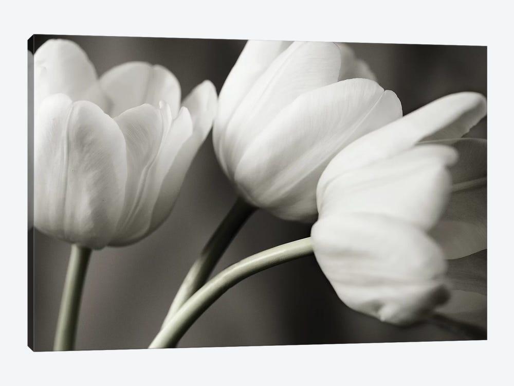 Row Of B&W Tulips by Tom Quartermaine 1-piece Canvas Art