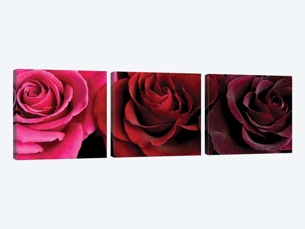 Row Of Roses On Black by Tom Quartermaine 3-piece Art Print