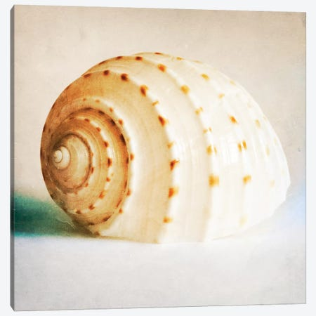 Antique Shell II Canvas Print #TQU27} by Tom Quartermaine Art Print